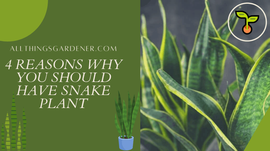 4 Amazing Facts About Snake Plant in 2021 That You Need To Know