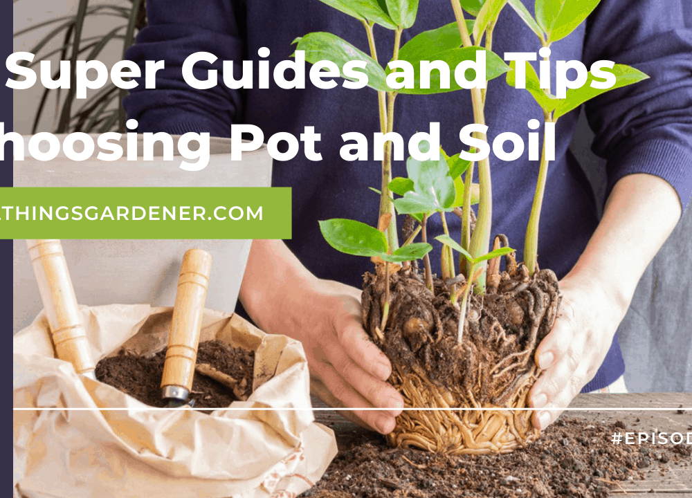 4 Super Guides and Tips Soil for Choosing and Potting Jade Plant (2021)