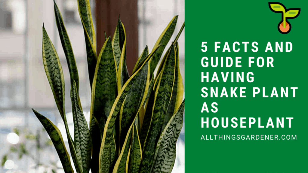 5 Superb Facts and Guide For Choosing Snake Plant as Houseplant in 2021