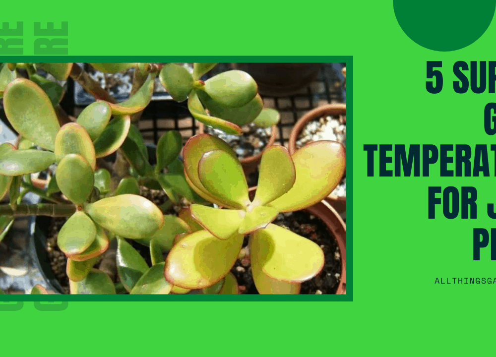 5 Superb Guides To Know Good Temperature For Jade Plant