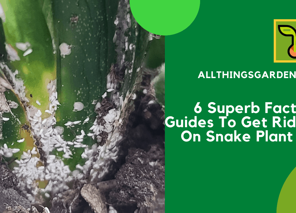 6 Superb Facts and Guides To Get Rid Bugs On Snake Plant 2021!