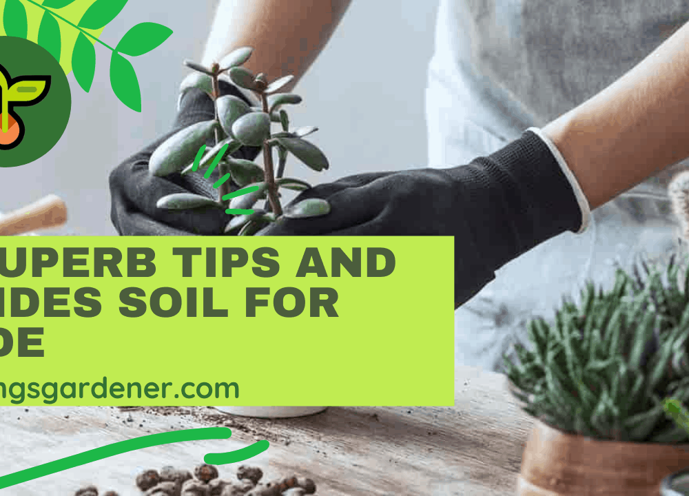 6 Superb Tips and Guides Soil for Jade 2021