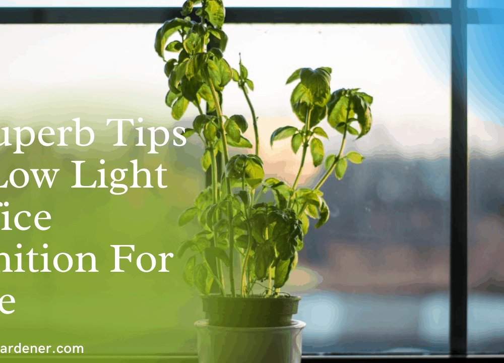 7 Superb Tips at Low Light Office Condition  to Grow Jade Plant