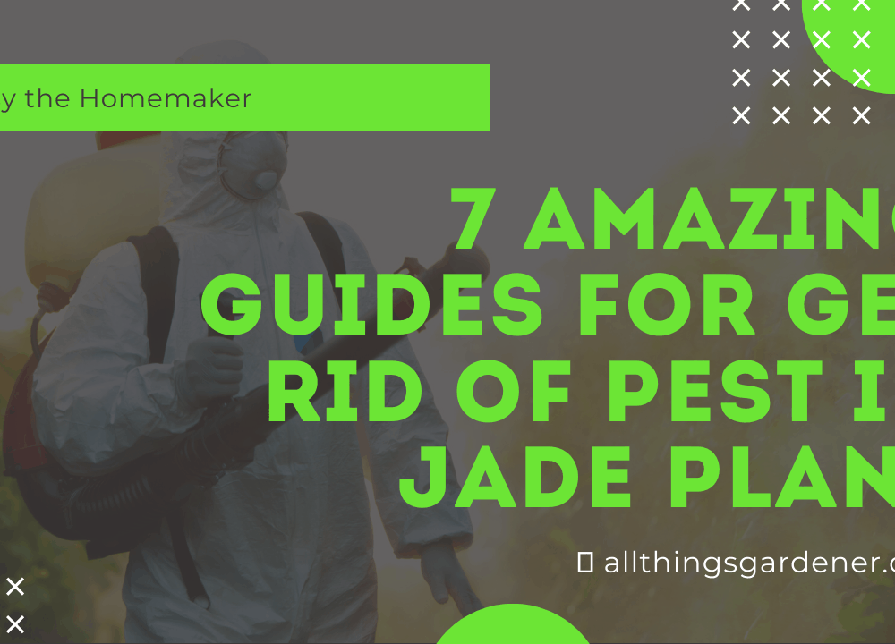 7 Amazing Guides for You To Get Rid Pest on Your Jade Plant.