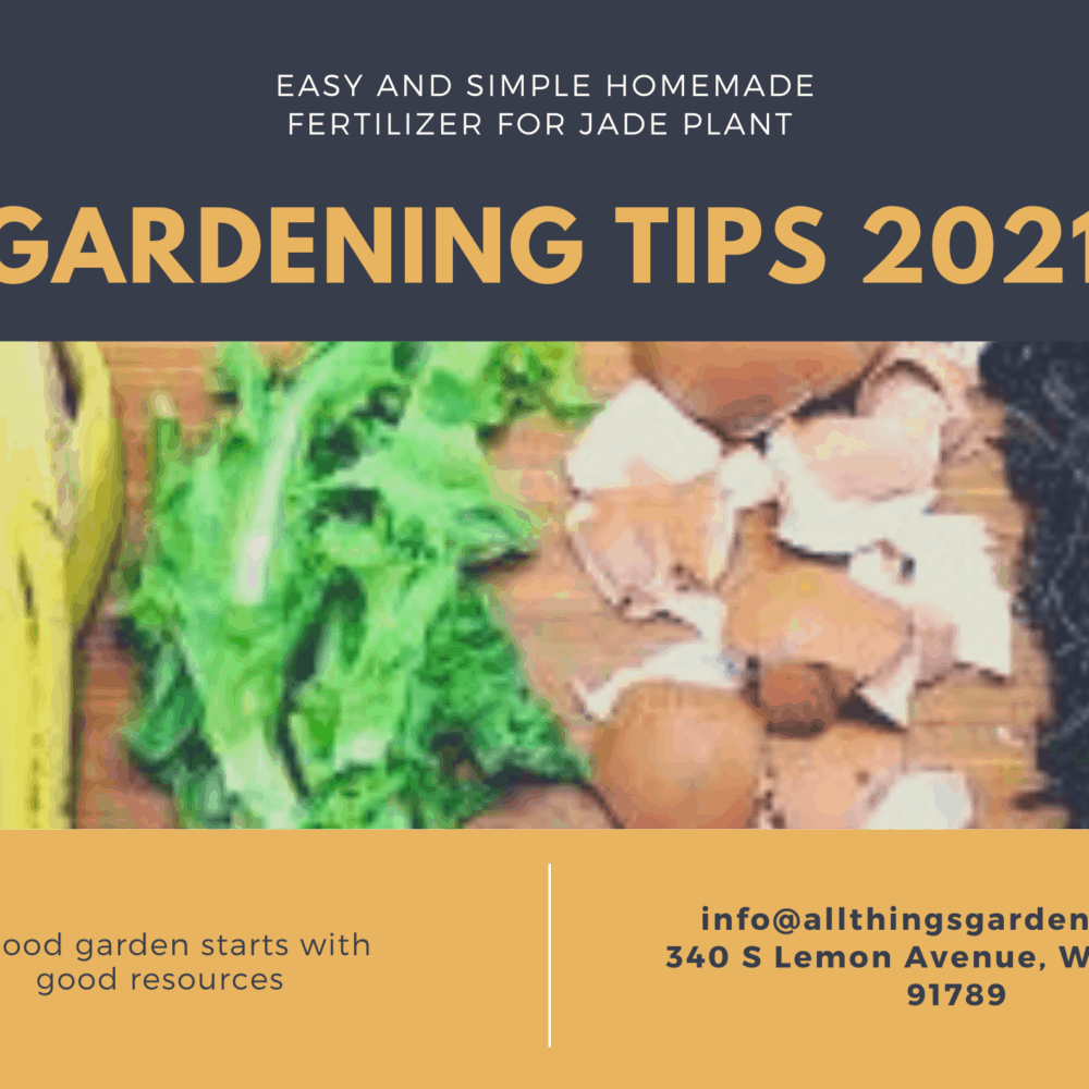 Homemade Fertilizer for Jade Plant: Simple and Easy Gardening Tips for 2021