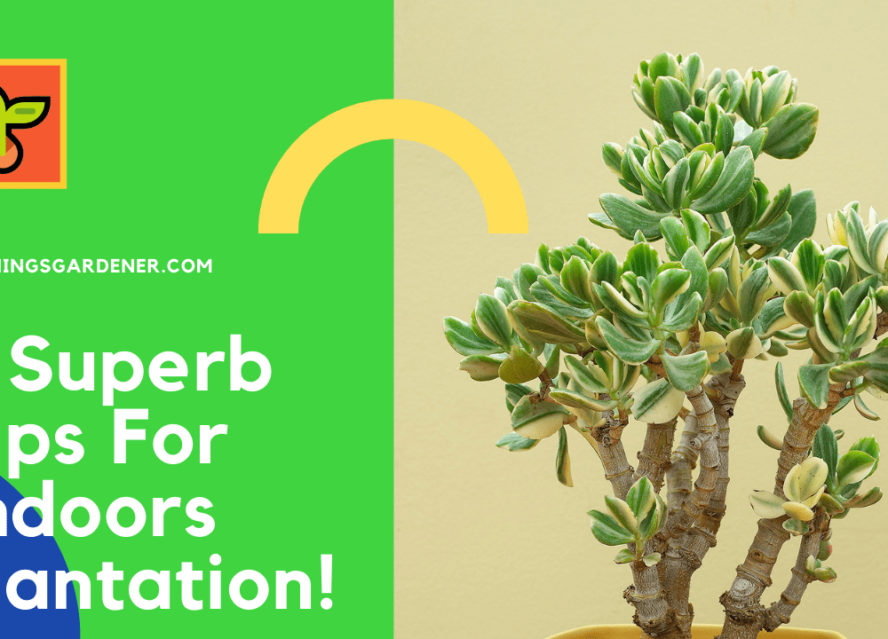 5 Superb Amazing Tips For Indoor Jade: Good Succulent Choices for Indoor 2021