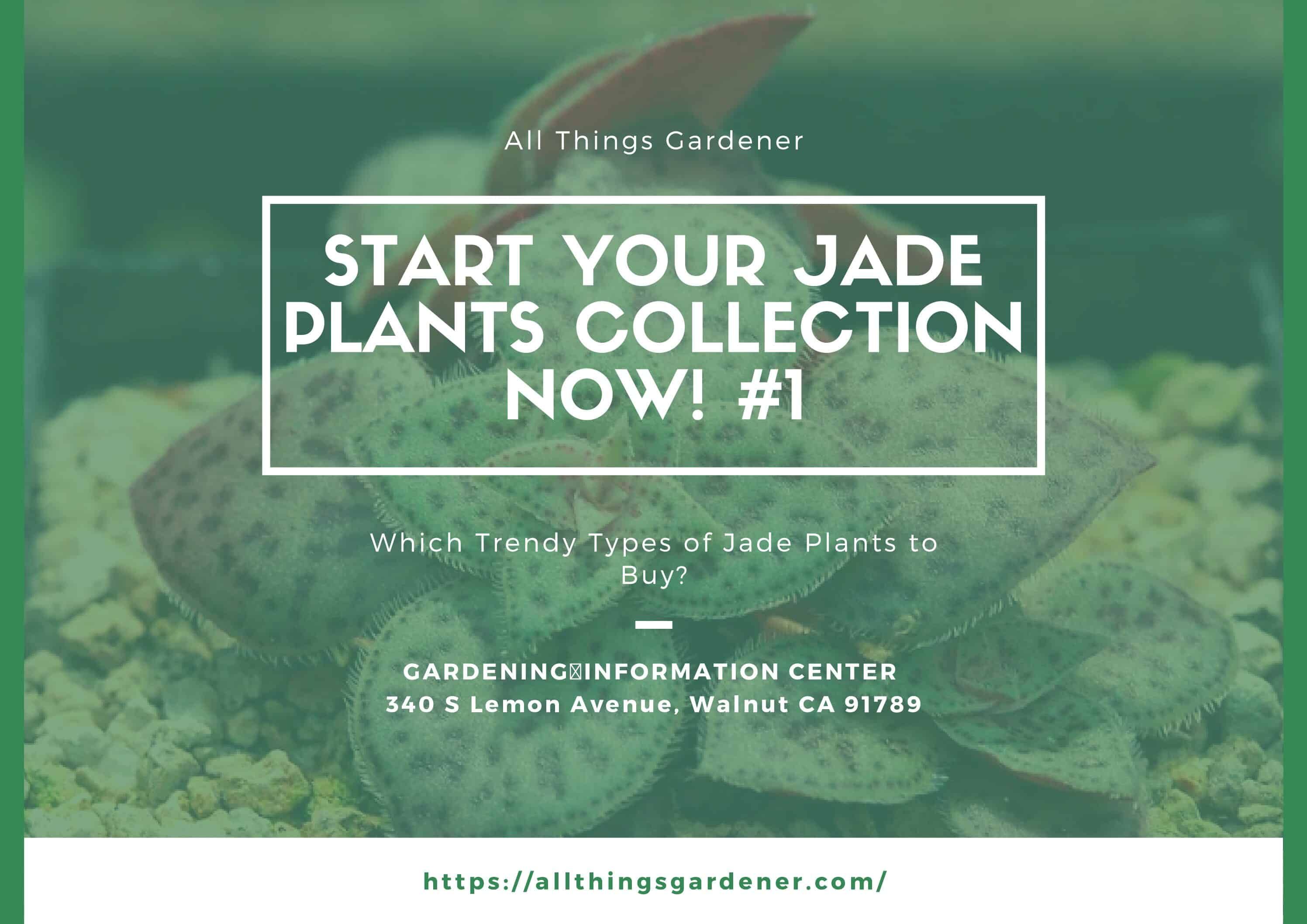 Which Trendy Types Of Jade Plants To Buy? Start Your Jade Plants Collection Now ! #1
