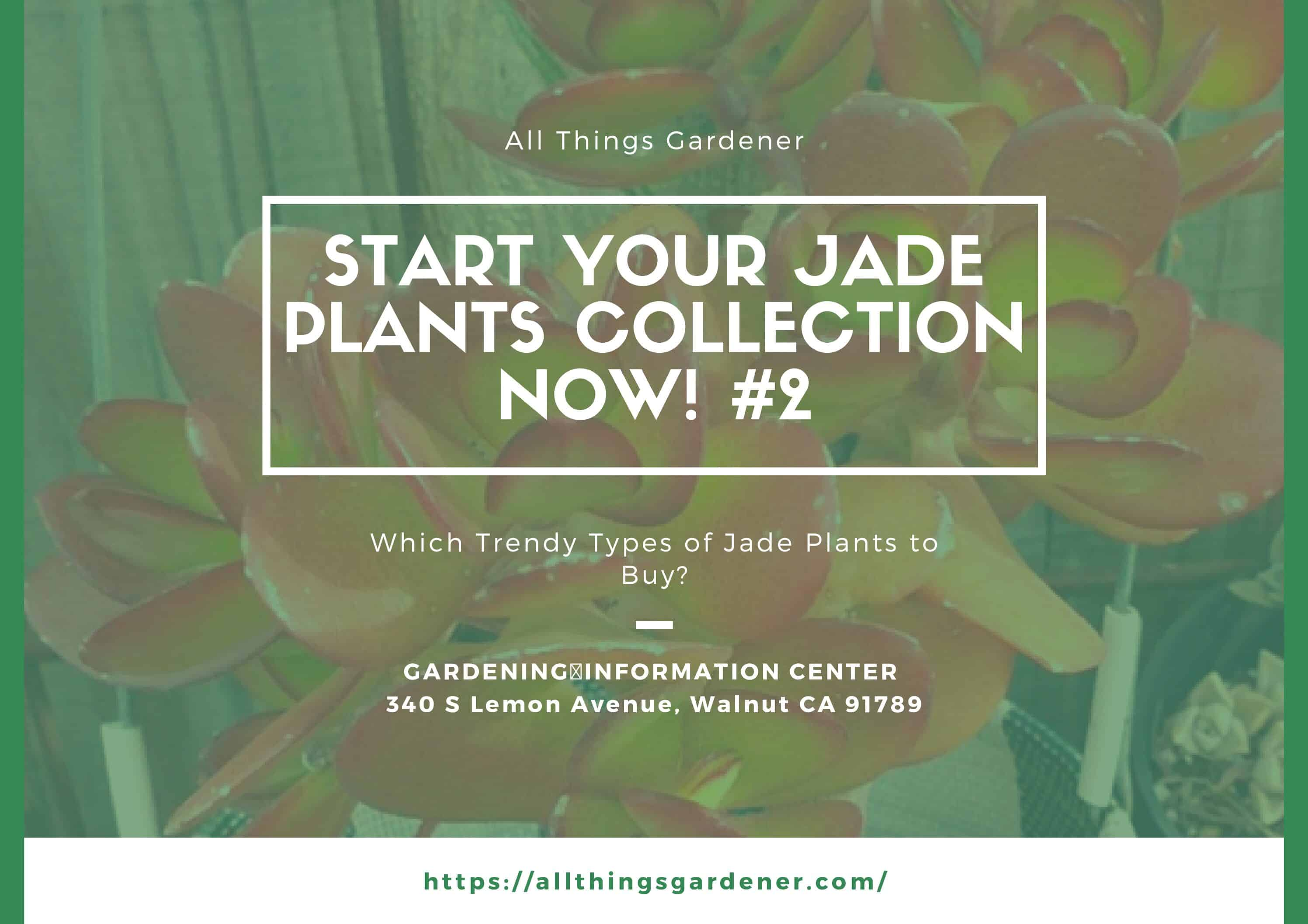 Which Trendy Types Of Jade Plants To Buy? Start Your Jade Plants Collection Now ! #2