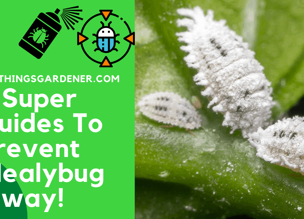 7 Super Guides To Prevent Mealybug On Your Jade Plant