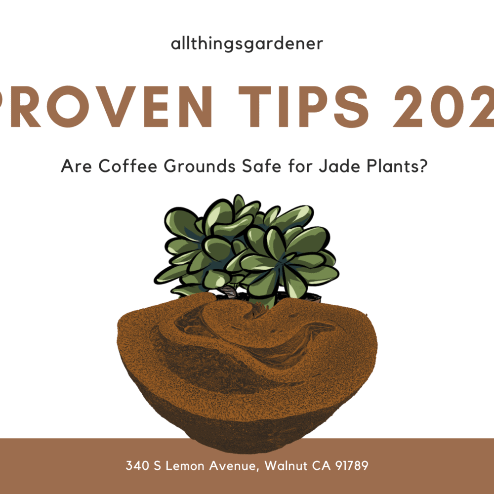 Are Coffee Grounds Safe for Jade Plants? Proven Tips 2021