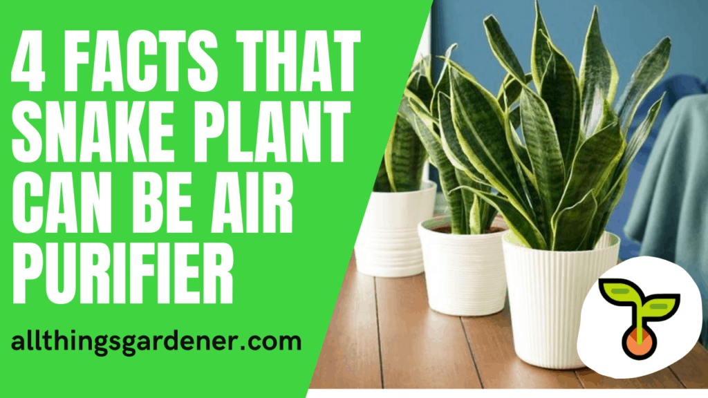 3 Superb Facts About Sansevieria or Snake Plant Good Can Improve Air Quality in the House 2021