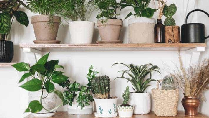Love Plants But No Sunlight? These Indoor Plants Can Be Your Best Buddy (2021)