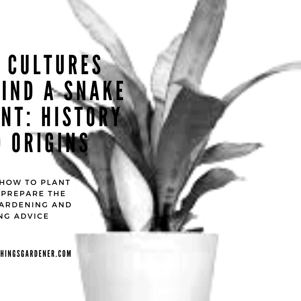 Superb Facts About Cultures Behind a Snake Plant: History and Origins (2021)