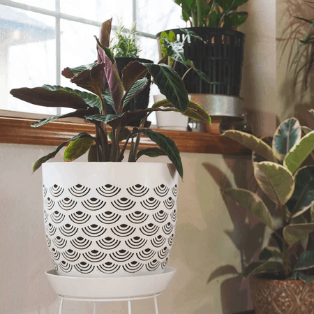 Houseplants Aeration: The Importance And How To Make Sure Of It! (2021)