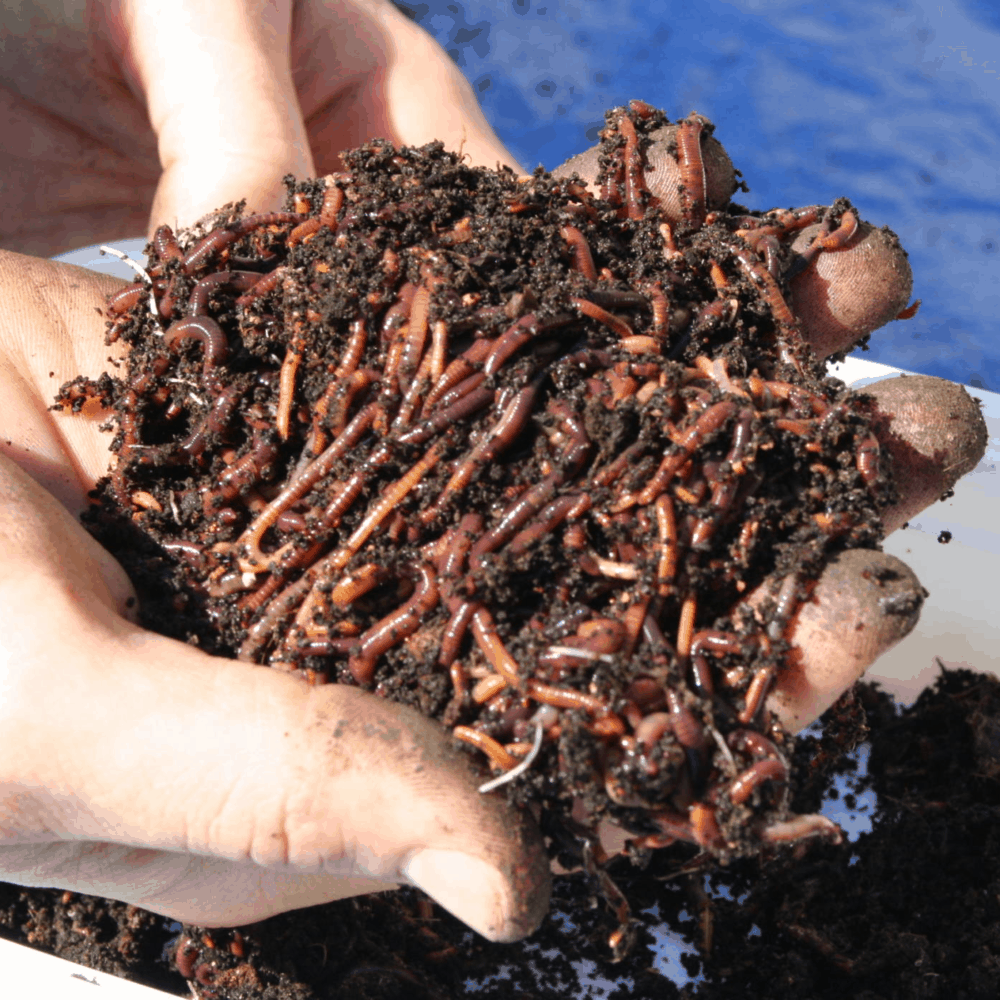 What is Vermicomposting? Amazing Trick To Try Method of Fertilizing Your Houseplants! (2021)