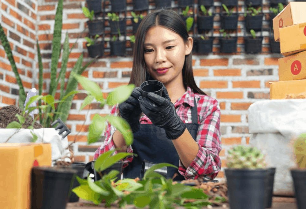 Preparing Houseplant Before Spring: 6 Amazing Tips To Look Out For 2021!