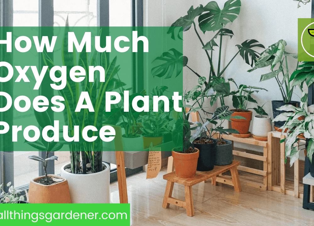 How Much Oxygen Does a Plant Produce? 5 Superb Indoor Plants For Your Oxygen Boost 2021