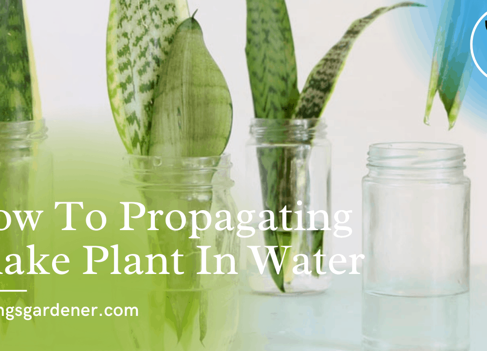 Superb Amazing Facts About Propagate Snake Plant in Water, Is That Possible? (2021)
