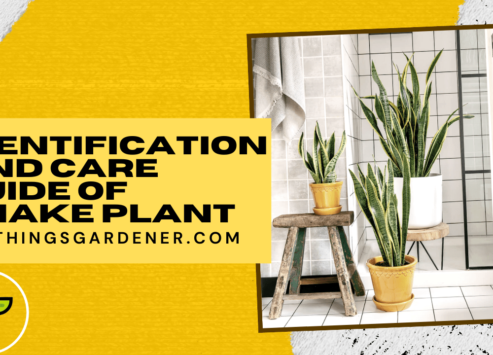 Superb Amazing Tips Snake Plants About Identification And Caring It (2021)