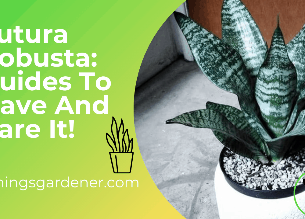 Superb Amazing Tips Caring Futura Robusta Snake Plant in 2021