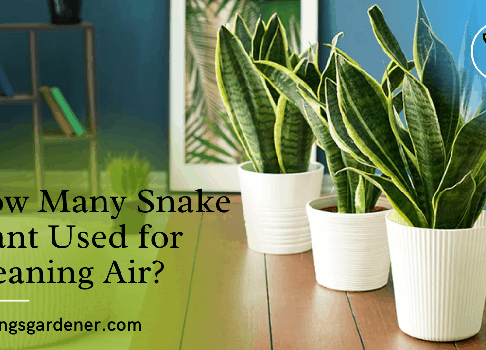 How Many Snake Plant Used for Cleaning Air? Here's the superb fact about it! (2021)
