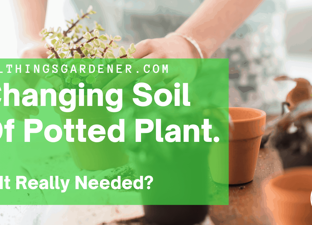 Superb Amazing Fact Why You Change The Soil of Your Potted Plants (2021)