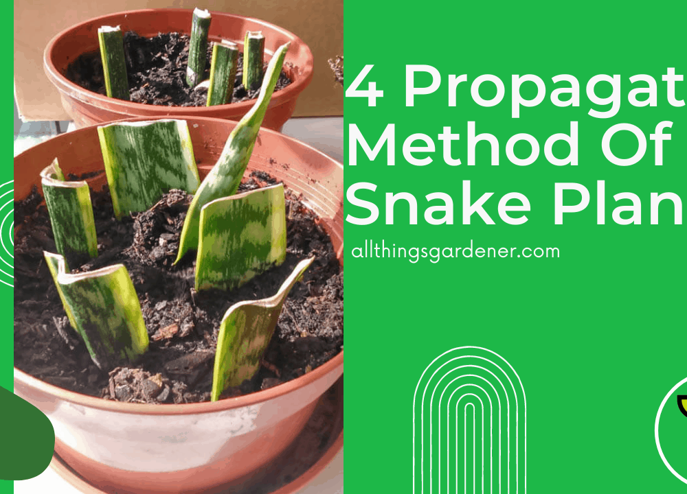 4 Superb Amazing Propagation Guide of Snake Plant (2021)