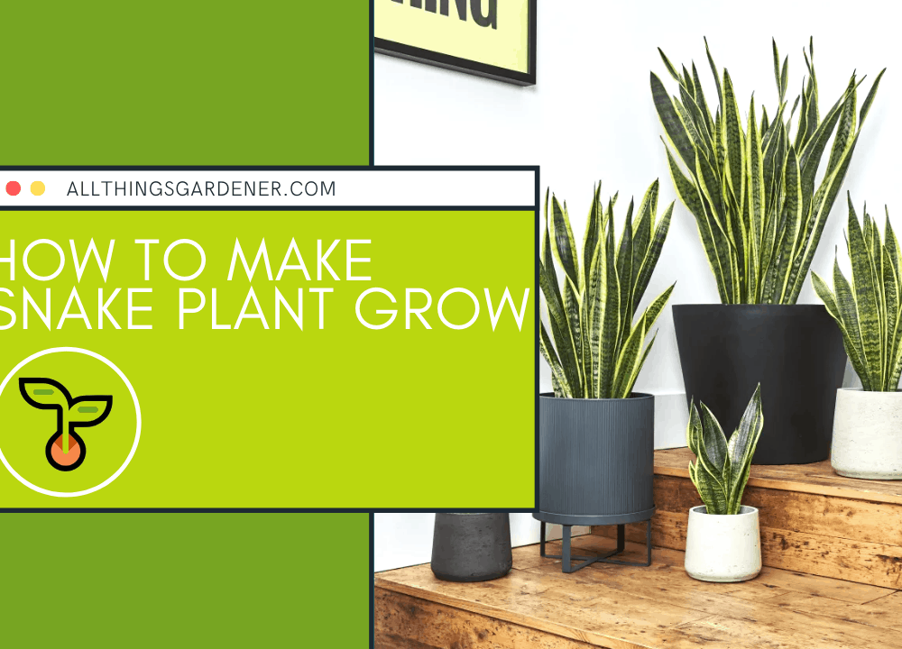 Superb Amazing Fact For How To Make Snake Plant Grow (2021)!