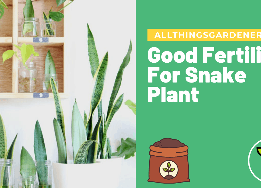 Superb Amazing Good Snake Plant Fertilizer That You Need To Have 2021!
