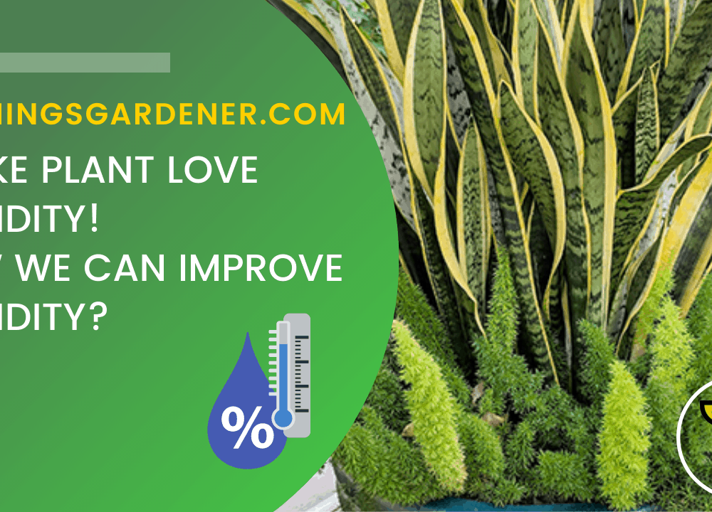Superb Amazing Fact About Humidity For Snake Plant (5 Tips for Improving Humidity) #1 (2021)