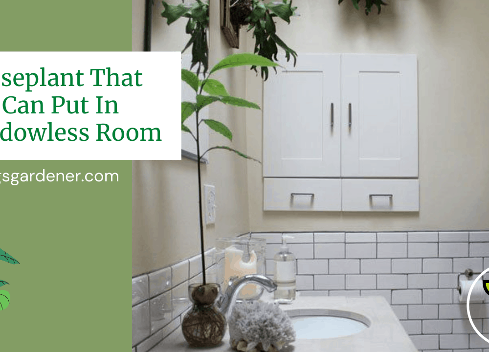 Superb Amazing List Planting In Windowless Room, 10 Houseplants You Can Put In (2021)