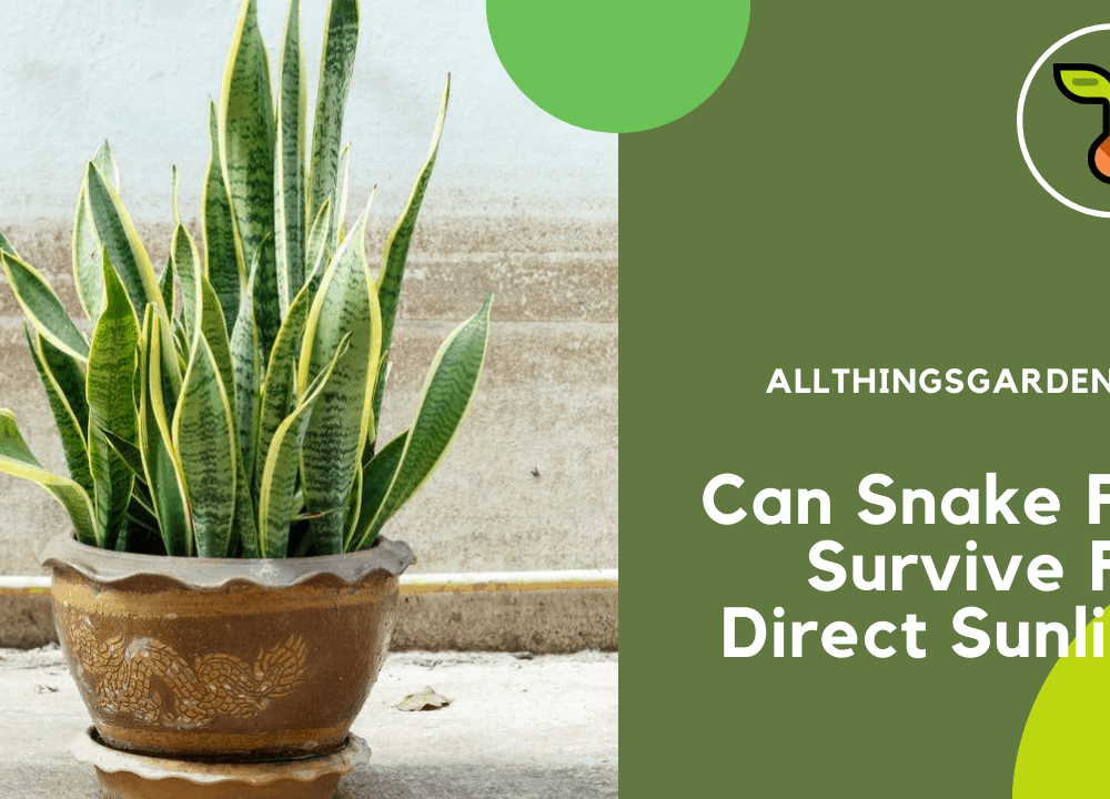 Superb Amazing Facts About Snake Plants To Survive From Direct Sunlight (2021)