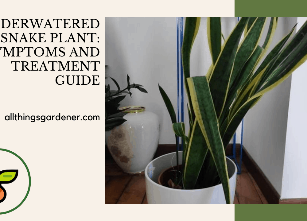 Superb Amazing Facts About Underwatered Snake Plant: Symptoms and Treatment Guide (2021)