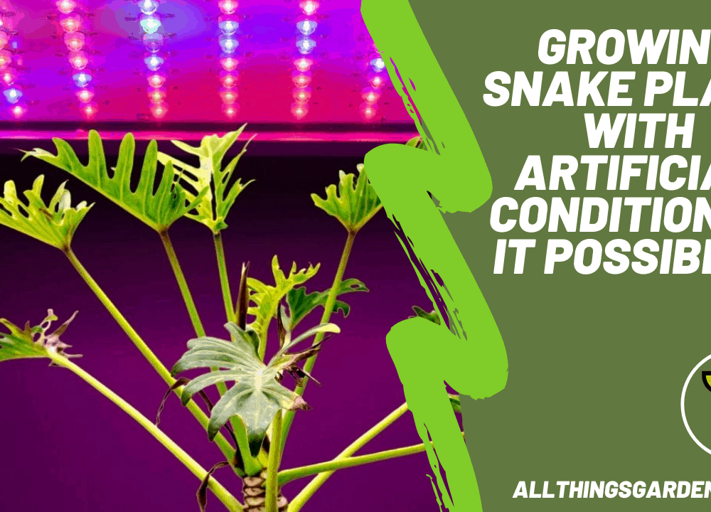 Growing Snake Plant With Artificial Condition, Is It Possible? Here's Superb Amazing Guide About It! (2021)
