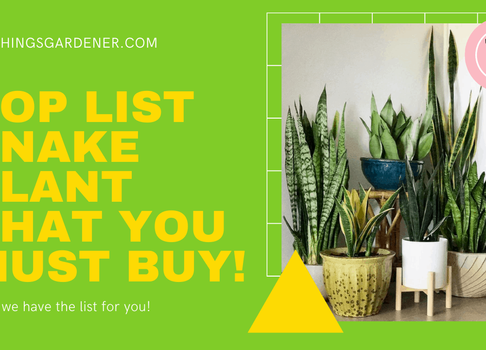 Top List Snake Plant That You Must Buy! Here's Superb Thing For Choosing It! (2021)