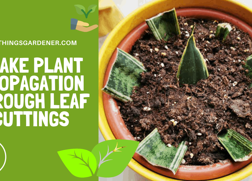 Snake Plant Propagation Through Leaf Cuttings! Here's Superb Methods How To Do It!(2021)