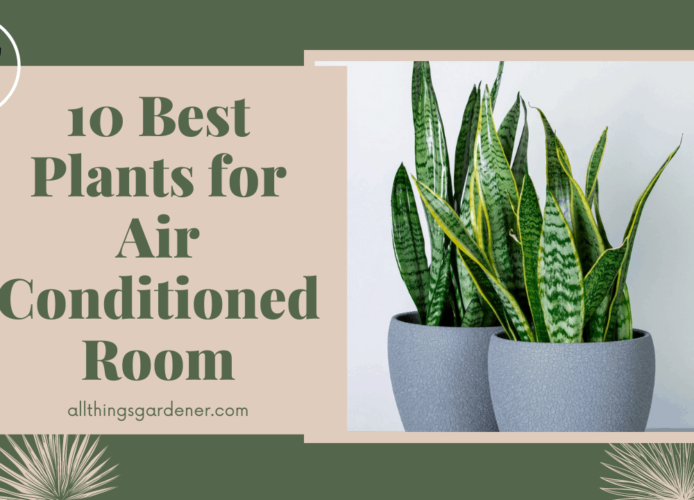 Here's Superb 10 List Best Plants for Air Conditioned Room And Care Guide for Each Plant! (2021)
