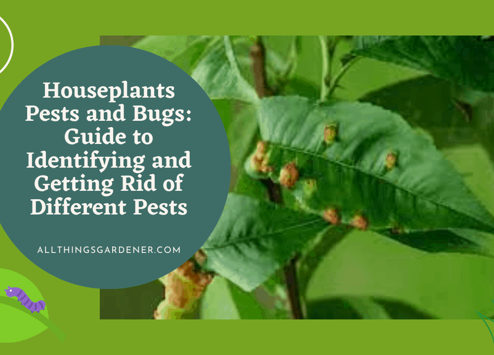 Houseplants Pests And Bugs: Superb Complete Guide To Identifying And Getting Rid Of Different Pests (2021)