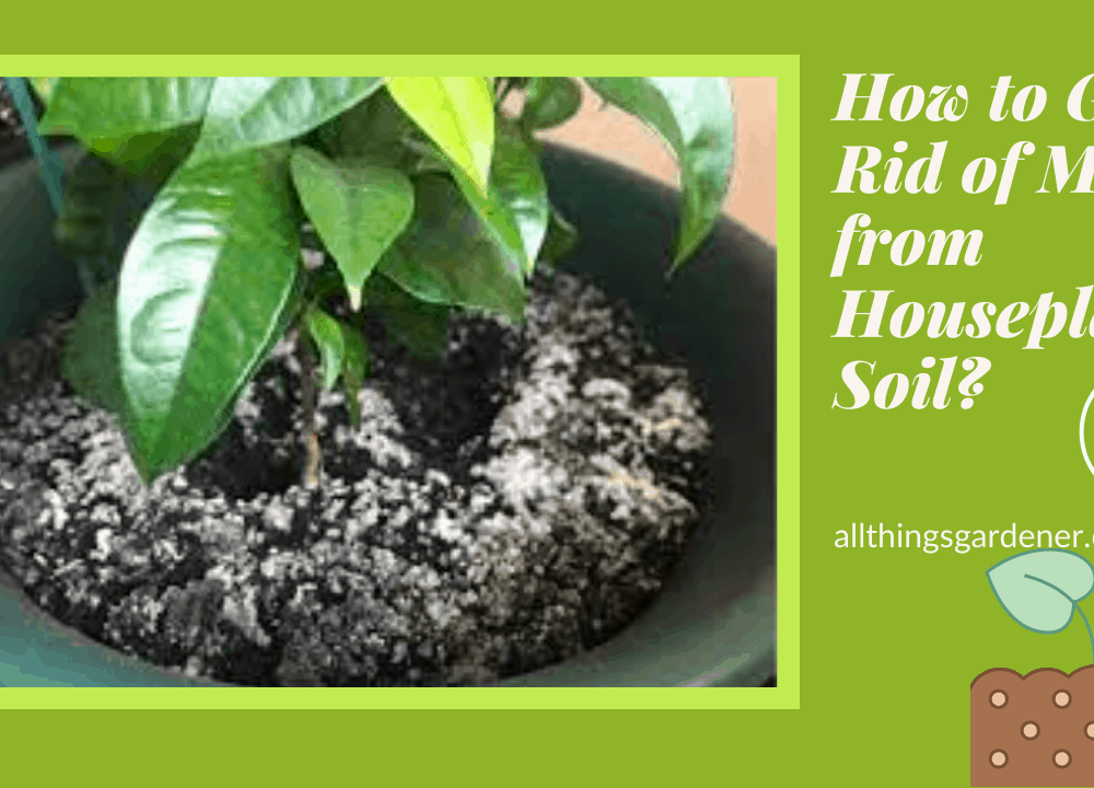 How to Get Rid of Mold from Houseplant Soil? Here's Superb Amazing Guide About It! (2021)
