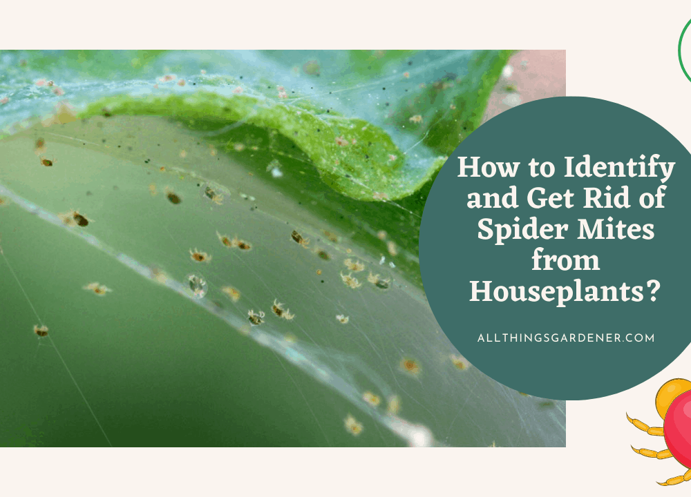 How to Identify and Get Rid of Spider Mites from Houseplants, Here's Superb Guide To Do It! (2021)