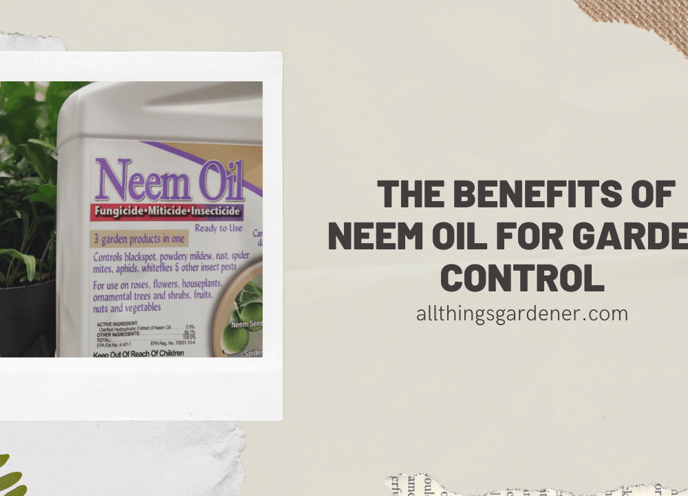 Superb Amazing Benefits of Neem Oil for Garden Control! (2021)