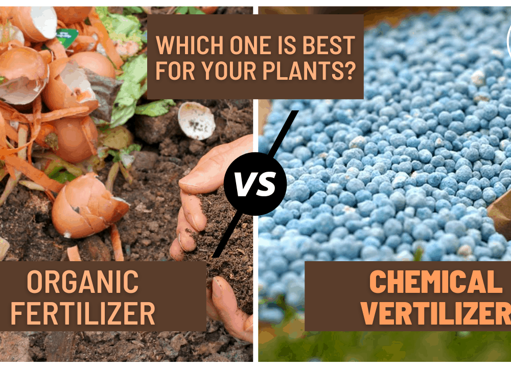 Organic vs Inorganic Fertilizer For Plant: Which one is Best For Your Plants? Here's Superb Guide To Choose It! (2021)