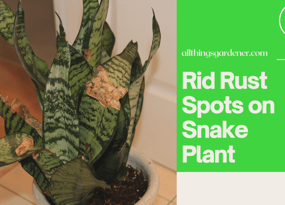 How To Get Rid Rust Spots On Snake Plant, Superb Amazing Guide How To Cure It! (2021)