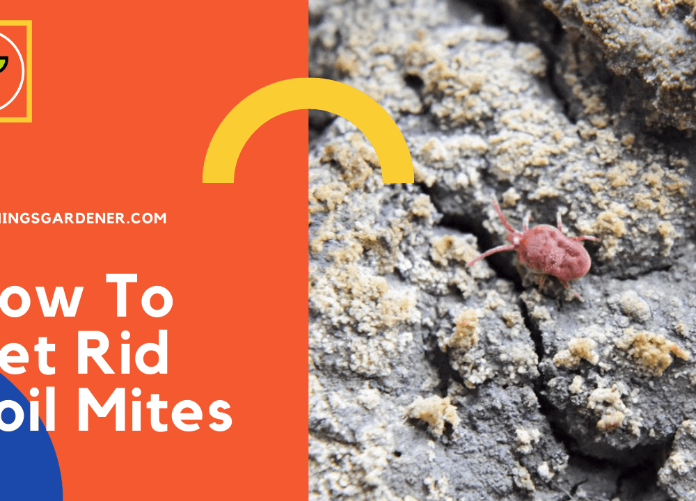 How To Get Rid Soil Mites, Superb Guide And Tips To Take Care Of It! (2021)
