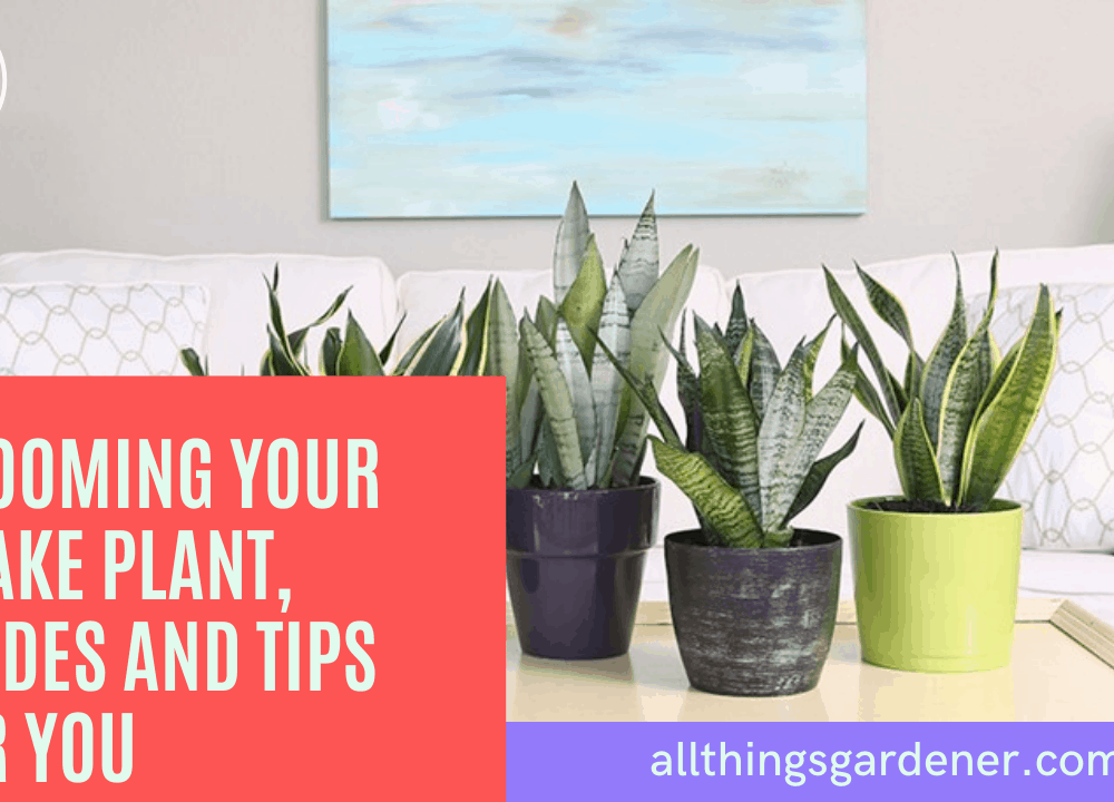Grooming Your Snake Plant, Superb Amazing Guides and Tips For You (2021)