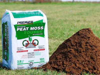 Why You Should Consider Using Peat Moss as Soil Amendment? Sure! Why Not? Here's Superb Fact About It! (2021)