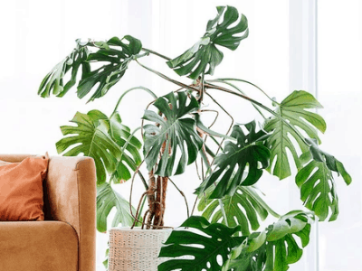 plants for air conditioned room