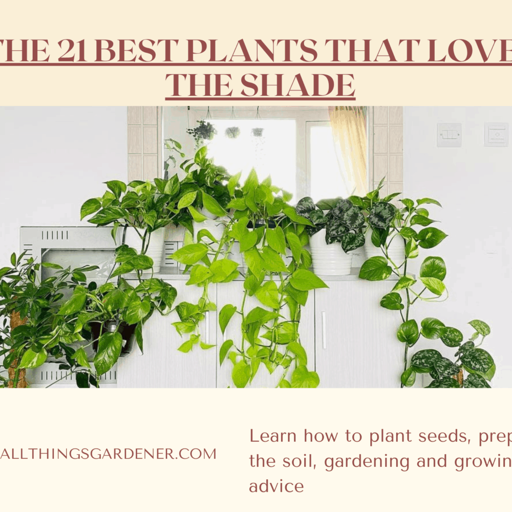 The 21 Best Plants that Loves the Shade