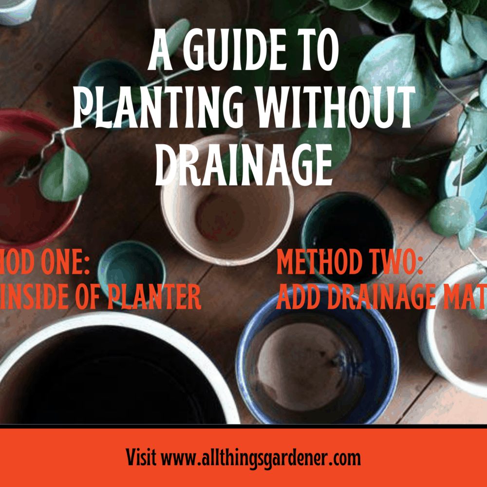 Can You Plant Plants In Pots Without Drainage Holes? The Captivating Facts You Need To Know [2021]