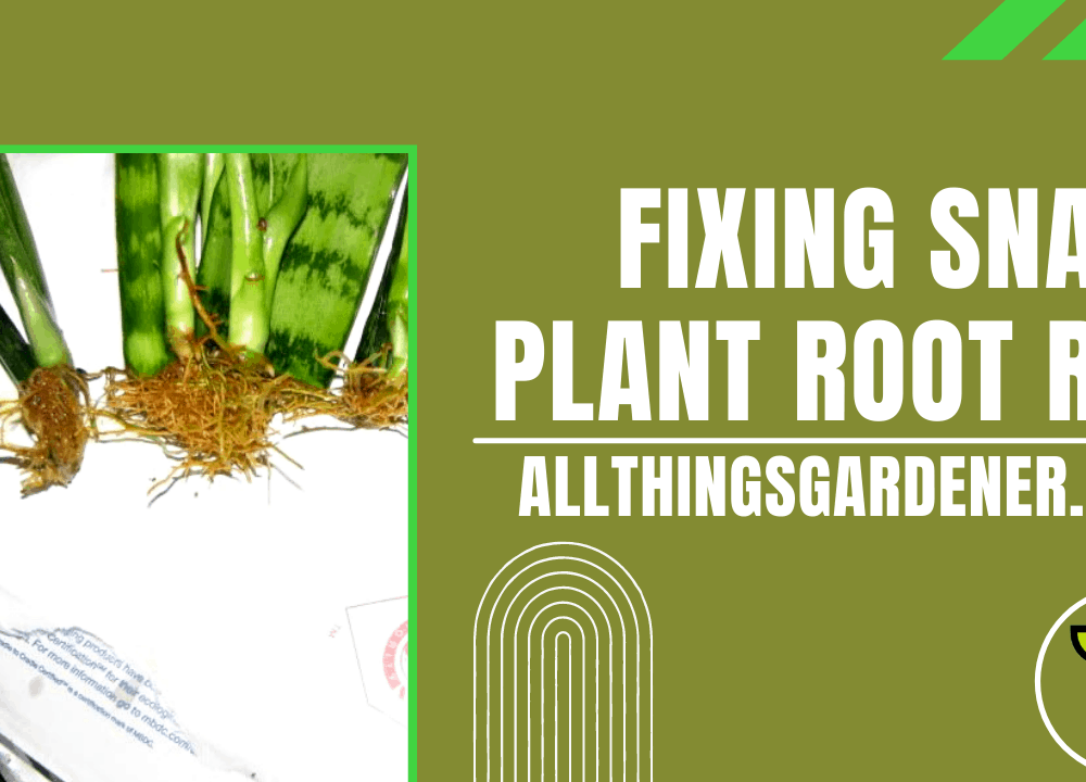 Superb Amazing Step-by-Step Fixing Root Rot On Snake Plant (2021)